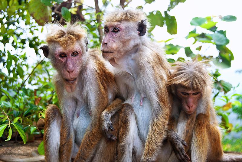 Viajes a Sri Lanka 05