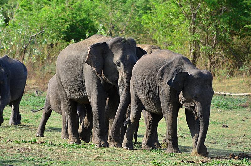 Viajes a Sri Lanka 02